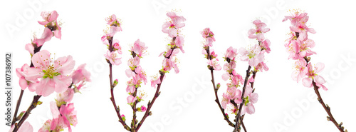 Photo  Spring flowers. Almond tree blossoms green leaves