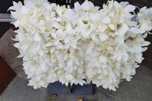 Fragrant White Tuberose Flower Lei Necklaces Awaiting Visitors In Hawaii