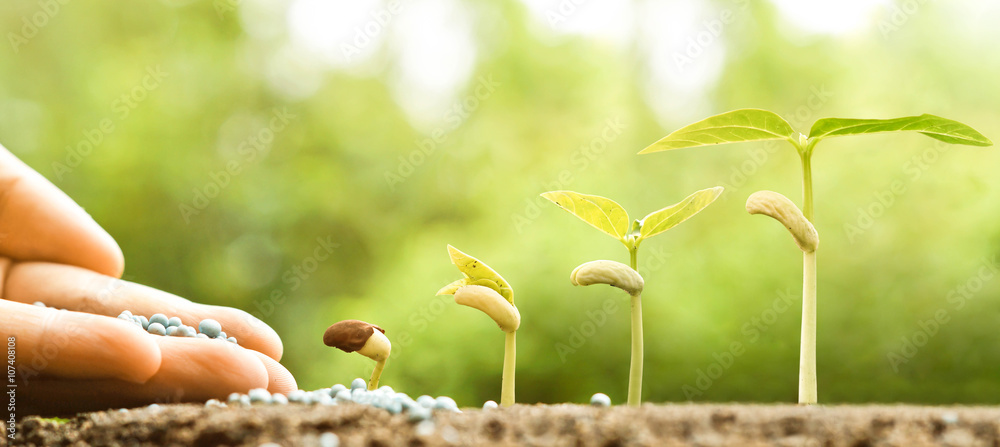 Fototapety, obrazy: hand nurturing young baby plants growing in germination sequence on fertile soil with natural green background