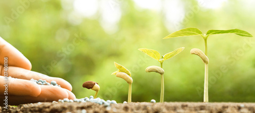 Foto op Aluminium Planten hand nurturing young baby plants growing in germination sequence on fertile soil with natural green background