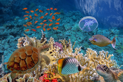 Cadres-photo bureau Tortue Colorful coral reef with many fishes and sea turtle