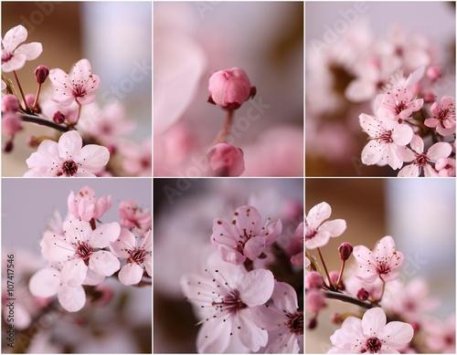 Kwiat wiśni - fototapety na wymiar