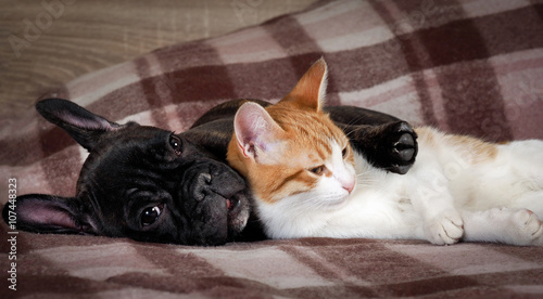 Keuken foto achterwand Kat White cat and black dog sleeping together under a knitted blanket. Friendship cats and dogs, animals in the apartment house. Cute pets. Love the different species of animals