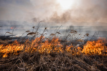 Burning Dry Grass And Reeds At Sunset. Natural Disaster.