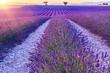 Beautiful sunset lavender field