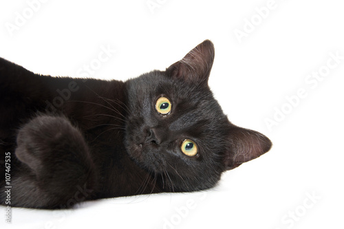 Fotomural Cute black cat on white