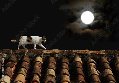 Canvas Print Gato en el tejado, luna llena, noche, animal