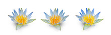 Three Beautiful Lotus Isolated On White Background.