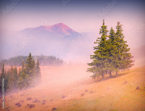 Tuinposter Purper light of sunrise_1