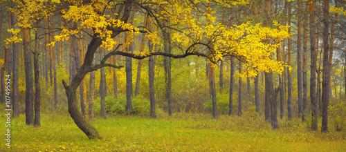 Poster Miel Dance_of_autumn