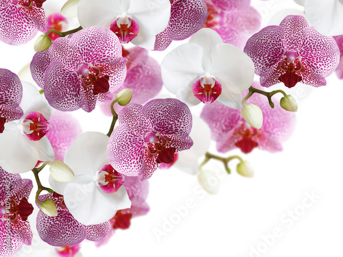 fototapeta na szkło Floral background. Orchids