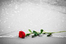Waves Washing Away A Red Rose ...