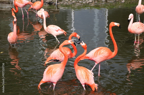 Photo Stands Flamingo Ein Flamingoteich
