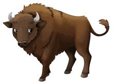 Cartoon Animal - Bison - Isolated - Illustration For Children