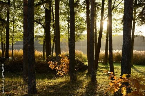 Słońce przebijające się przez drzewa jesienią - fototapety na wymiar