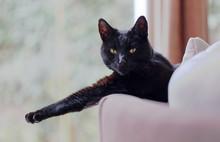 Black Cat Relaxing