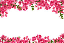Bougainvillea Flower Frame On ...