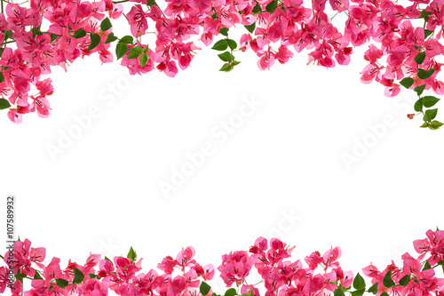 Wall Murals Azalea Bougainvillea flower frame on white background ,Provincial flowe