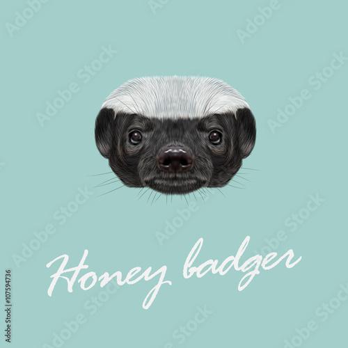 Fotografie, Tablou Vector Illustrated portrait of Honey badger.