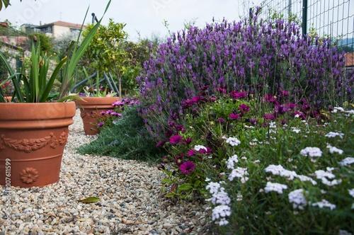 Giardino Con Fiori Di Lavanda E Vasi Acquista Questa Foto Stock Ed
