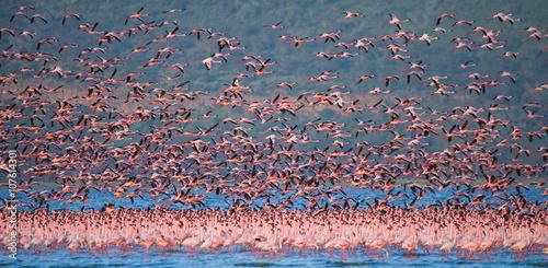 Huge flock of flamingos taking off. Kenya. Africa. Nakuru National Park. Lake Bogoria National Reserve. An excellent illustration.