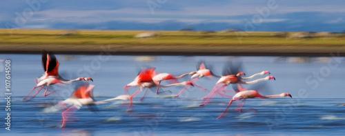 Foto op Aluminium Flamingo Group of flamingos before takeoff. Kenya. Africa. Nakuru National Park. Lake Bogoria National Reserve. An excellent illustration.