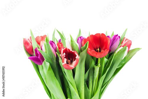 Poster Fleuriste Tulips on white background