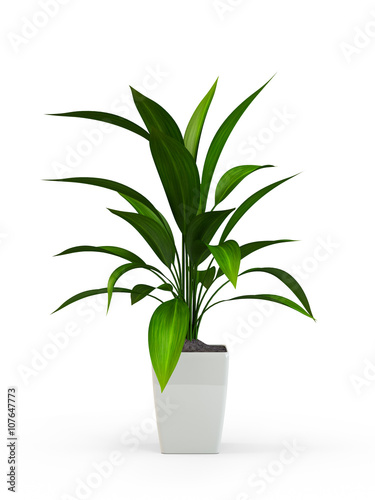 Cuadros en Lienzo Green potted plant isolated on white background