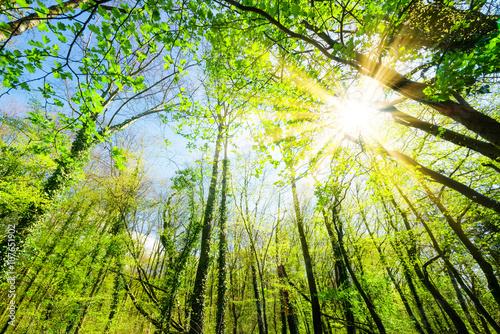 Foto op Aluminium Pistache Sonnenstrahlen scheinen durch Baumkronen im Wald