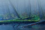 Dzika przyroda - rzeka w lesie. Warmia i Mazury.