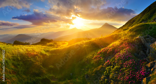Fototapety, obrazy: Rhododendron