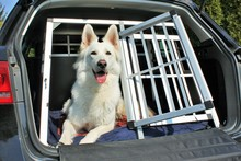 Hund Kofferraum