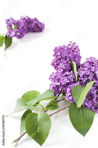 Fotobehang Lilac Lilac branches on white table