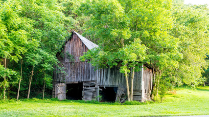 Hidden by trees is a moonshiners cabin in Alabama