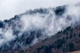 Las na zboczu góry pokryte mgłą - 107687595