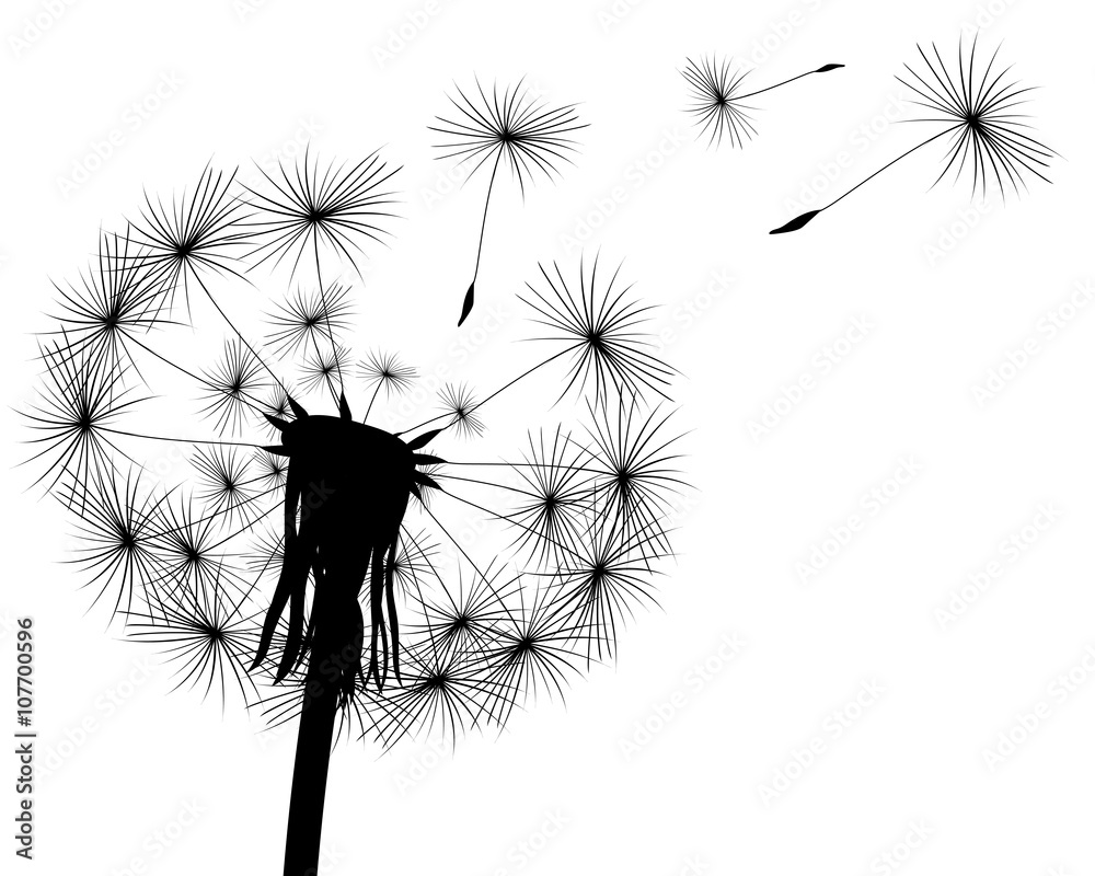 Fototapety, obrazy: silhouette with flying dandelion buds