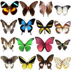 Collection of beautiful tropical butterflies isolated on white