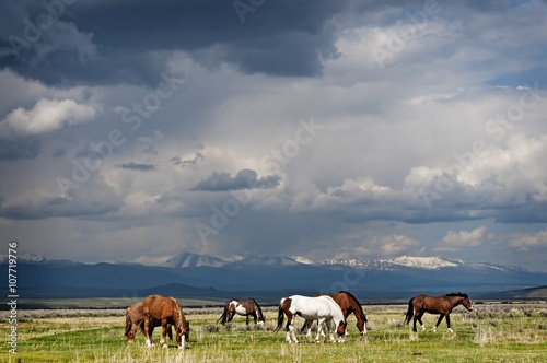 Horses Grazing before the Storm