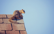 Squirrel On The Roof Top Against Blue Sky