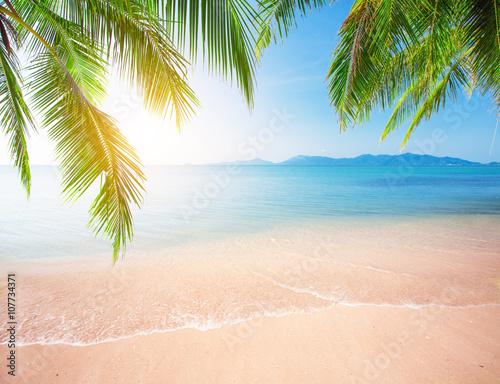 Foto auf AluDibond Strand Palm and tropical beach