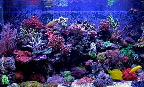 Staande foto Koraalriffen Amazing Coral Reef Aquarium moment