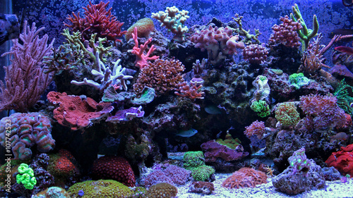 Tuinposter Onder water Amazing Coral Reef Aquarium moment