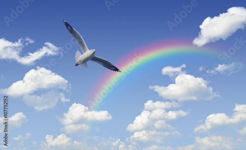Seagull flying over rainbow with white clouds and blue sky, Free
