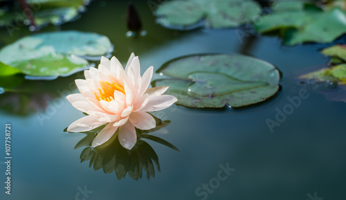 Recess Fitting Lotus flower Lotus flower
