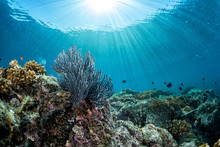 Diving In Colorful Reef Underw...
