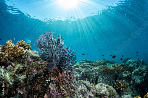 Photo diving in colorful reef underwater