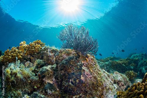 Papiers peints Recifs coralliens diving in colorful reef underwater