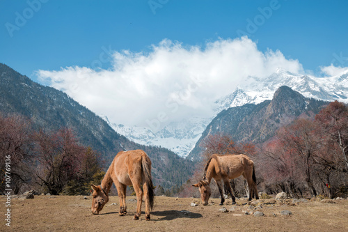 Photo sur Toile Elephant Landscape in countryside