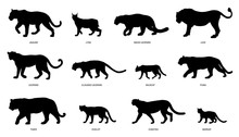 Wildcats Silhouettes
