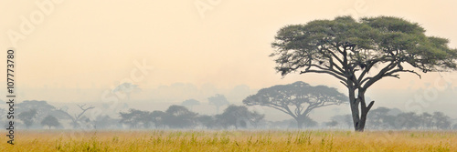 Stickers pour porte Afrique Beautiful scene of Serengeti National park